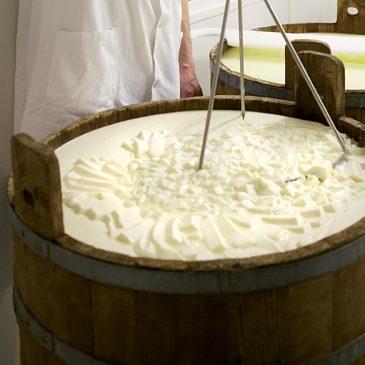 Appellation 100 % fermière : découvrez les secrets de fabrication du fromage AOP Salers